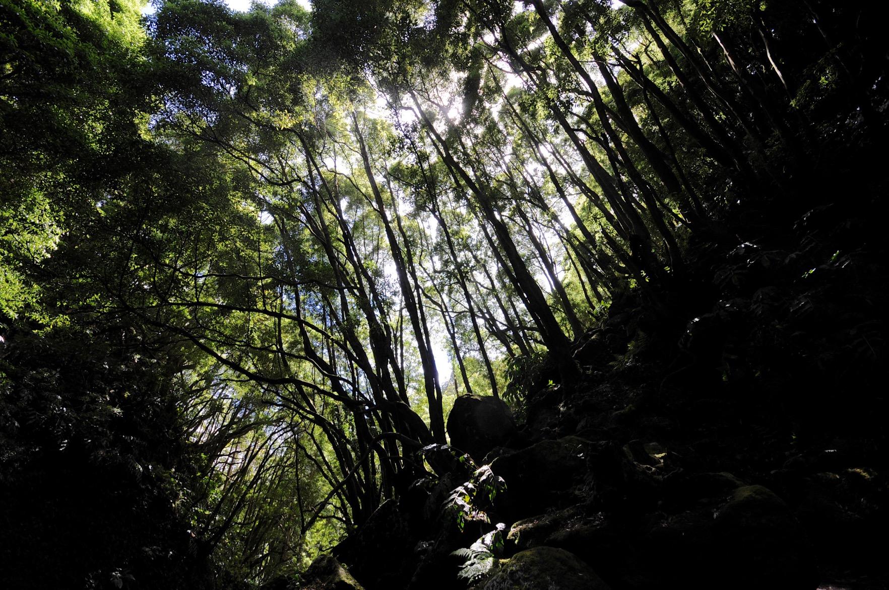 Azoren-Tag-07-4-Wanderung-Faial-da-Terra-0790