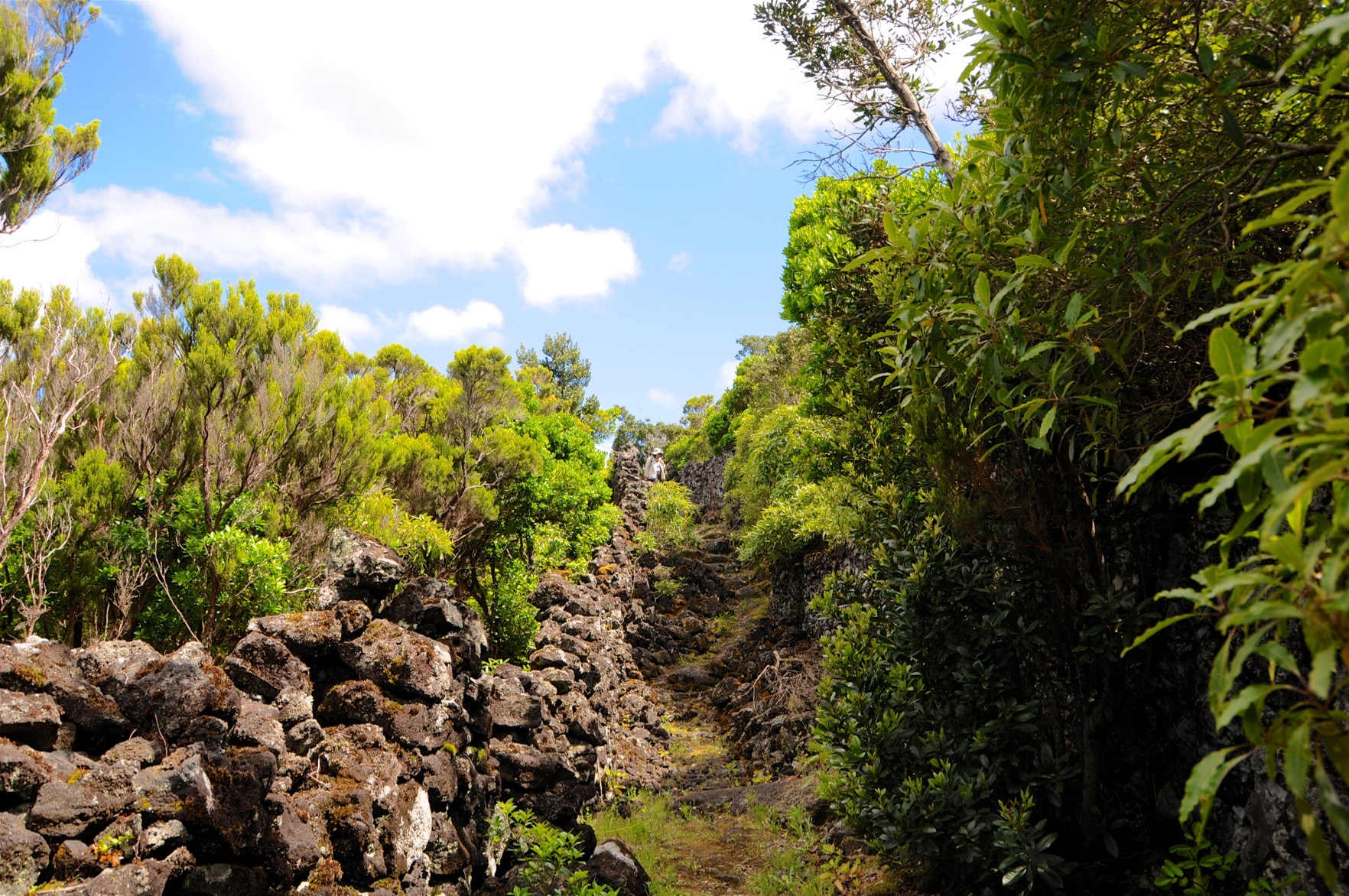 Azoren-Tag-12-6-Wanderung-Lajido-1284