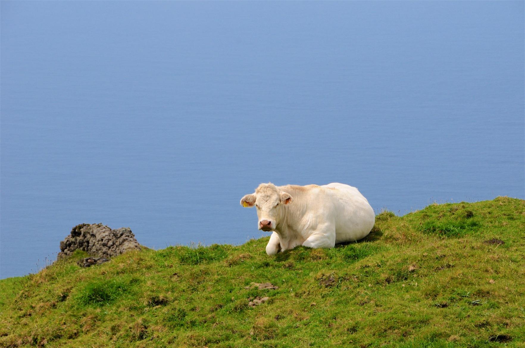 Azoren-Tag-14-Inselinnere-1478