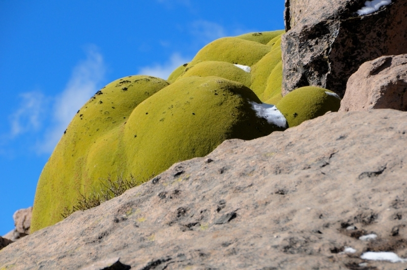 chile-2013-tag-04-2-lauca-np-0548