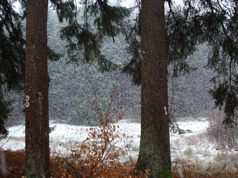 pfalz_altschlossfelsen-03-2008-104