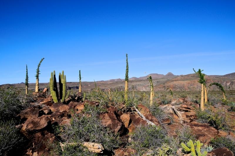 mexiko-2012-tag-12-np-san-francisco-1736