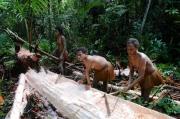 papua-2012-tag12-kuruwai-sago-1287