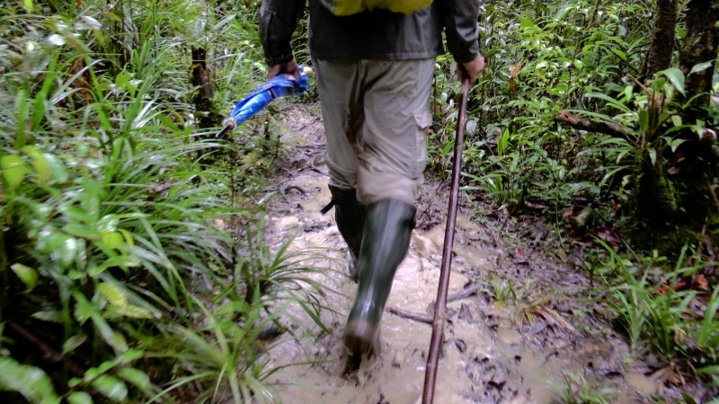 papua-2012-tag11-trekking-1184