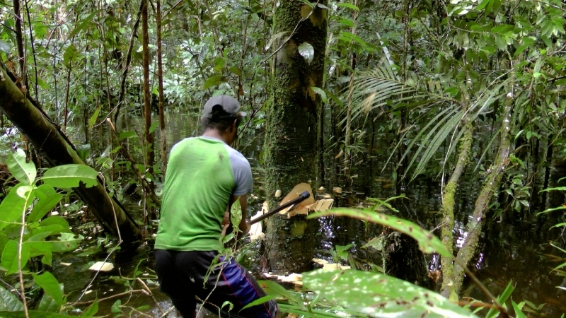 papua-2012-tag11-trekking-1199