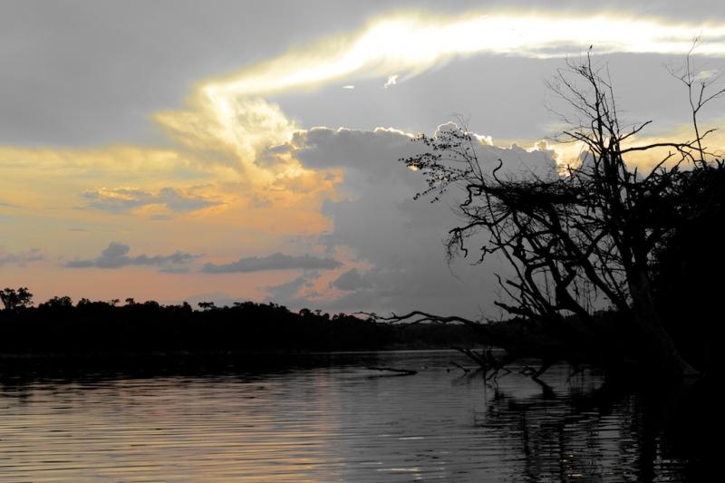 14-urubu-2607-amazonien-2013
