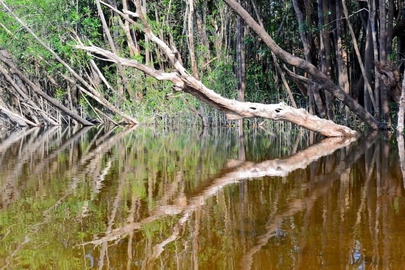 14-urubu-2703-amazonien-2013
