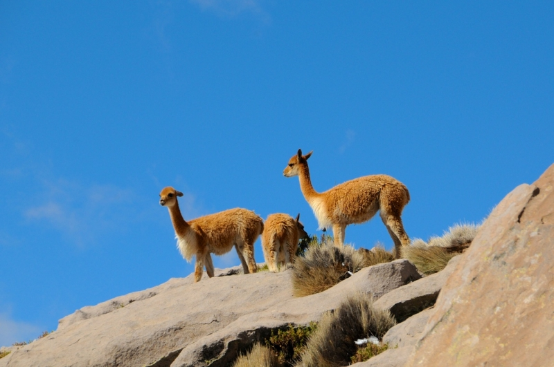 chile-2013-tag-04-2-lauca-np-0581
