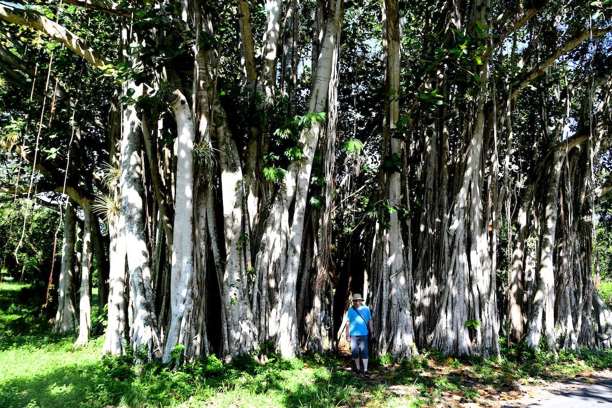 20-Kuba-2019-Jardin-Botanico-0669
