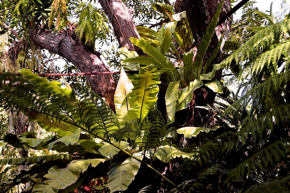 36-Kuba-2019-Herbario-1318