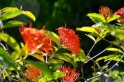 20-Kuba-2019-Jardin-Botanico-0678