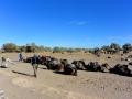 13 Zeltcamp Sahara - 0607