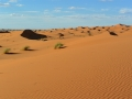 13 Zeltcamp Sahara - 0620
