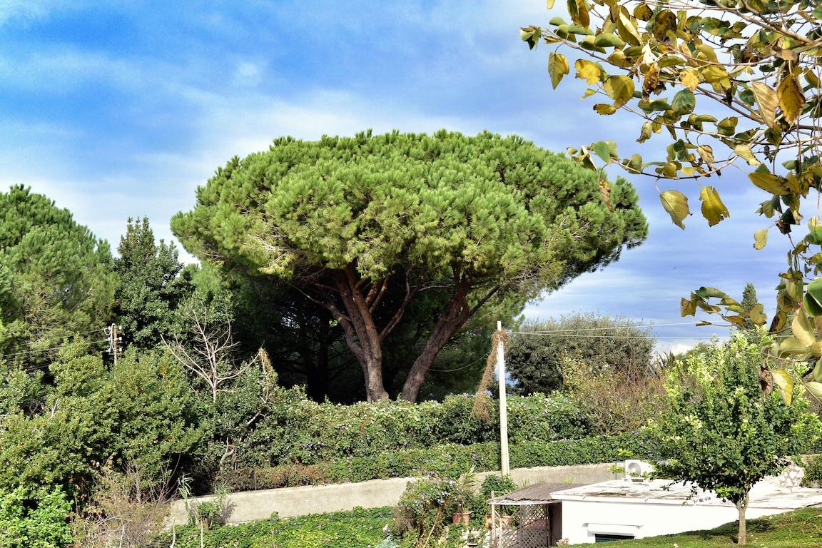 Tag 06 Capri - 047