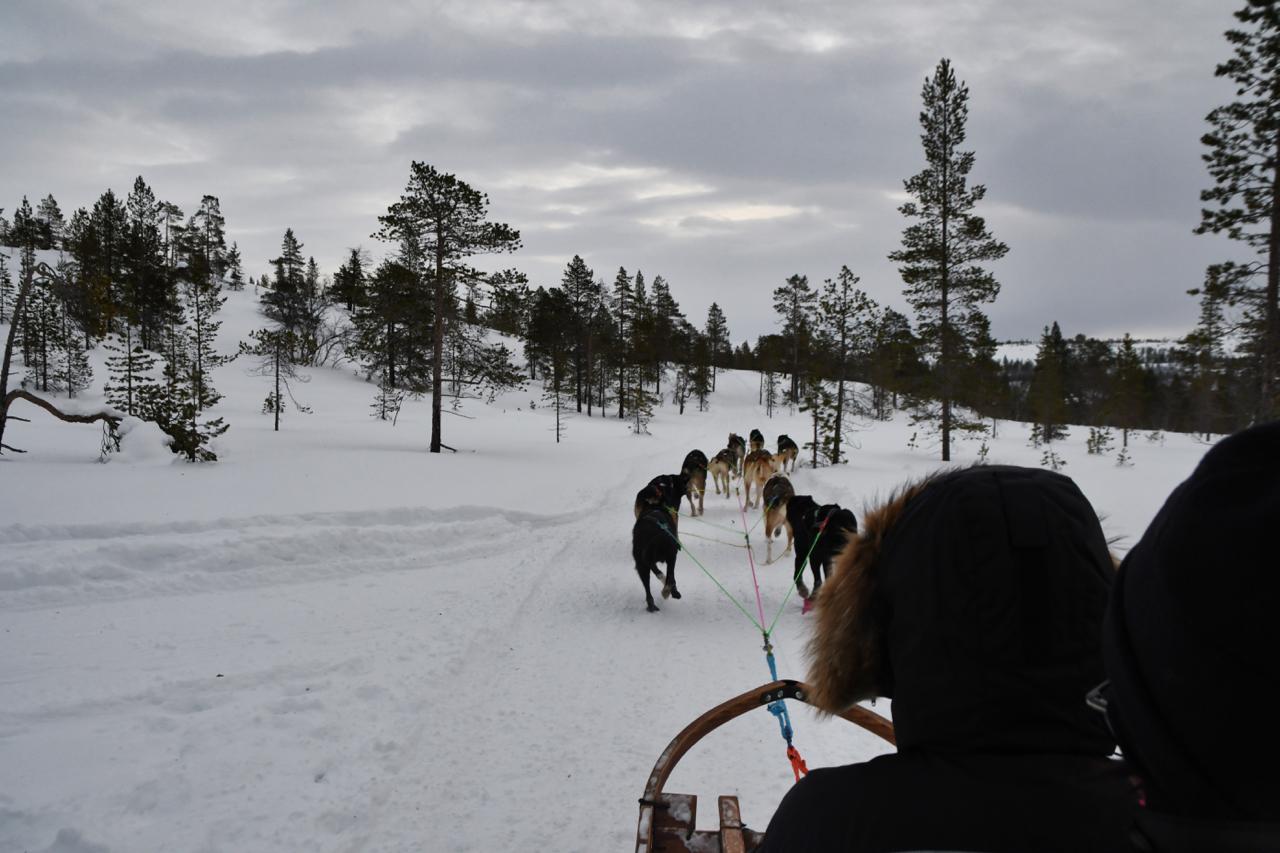 15-Kirkenes-Schlittenhunde-0833