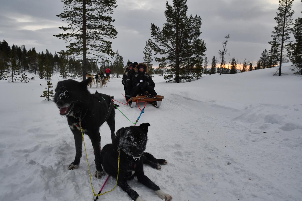15-Kirkenes-Schlittenhunde-0839