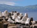 Azoren Tag 12-4 Madalena 1161