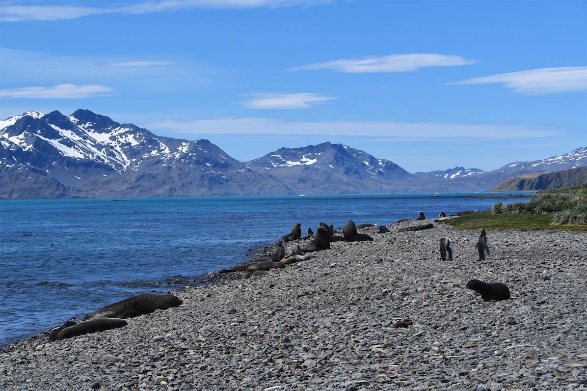 10 Sued Georgien - Grytviken 020