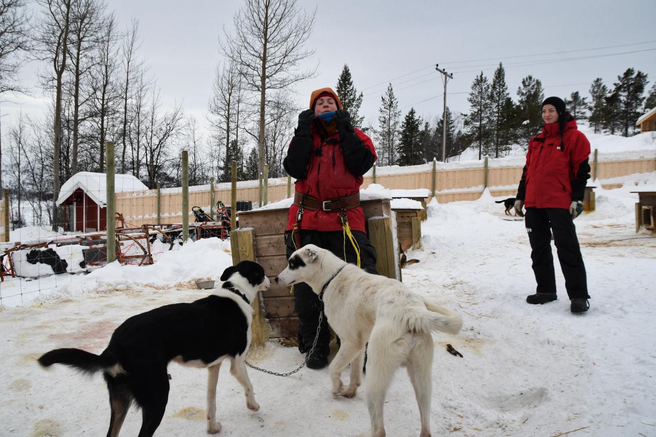 15-Kirkenes-Schlittenhunde-0788