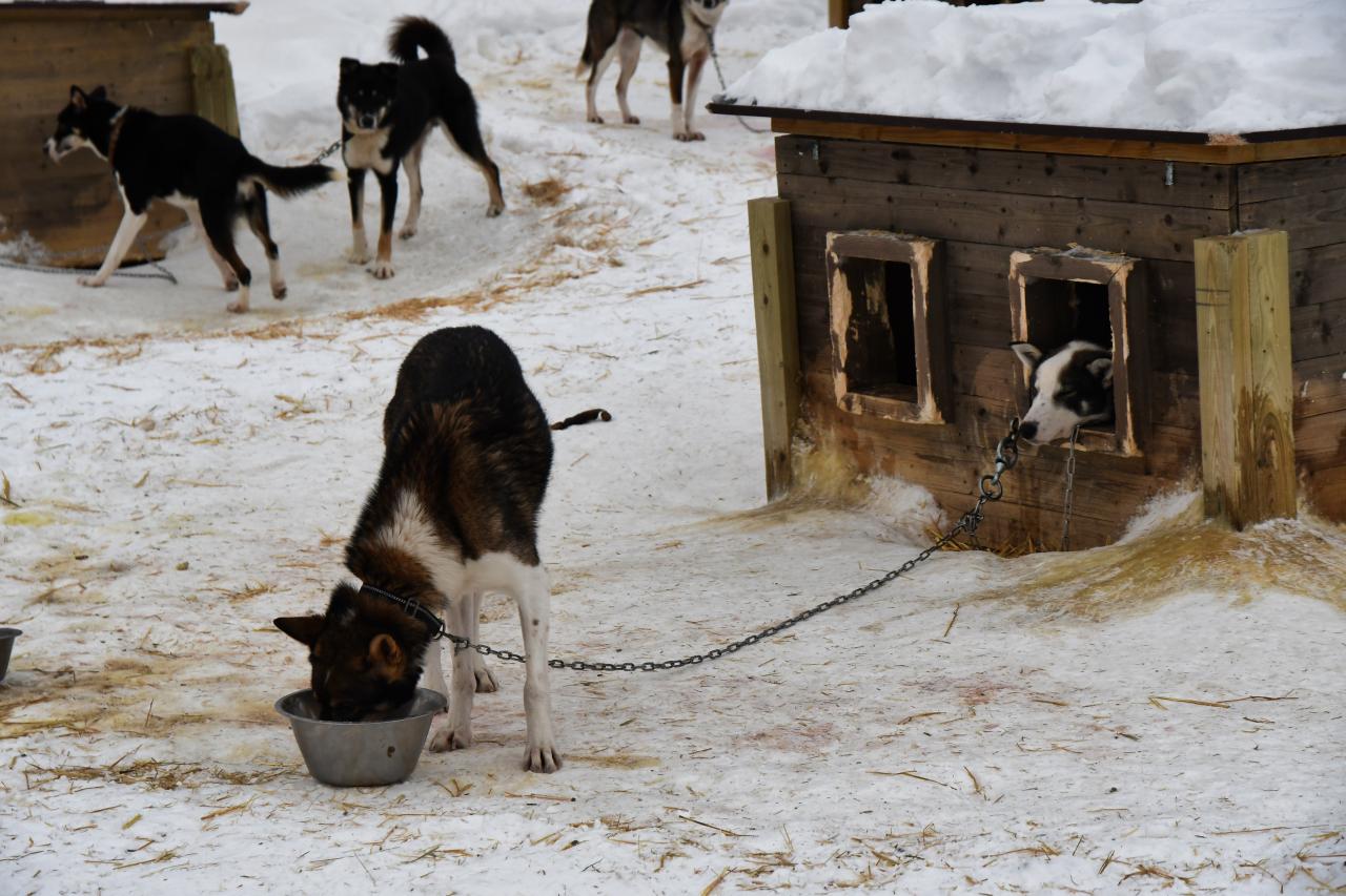 15-Kirkenes-Schlittenhunde-0792