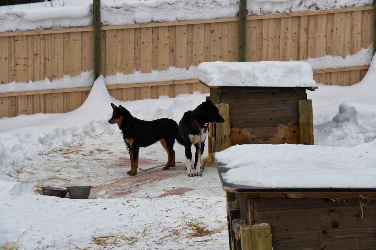 15-Kirkenes-Schlittenhunde-0793