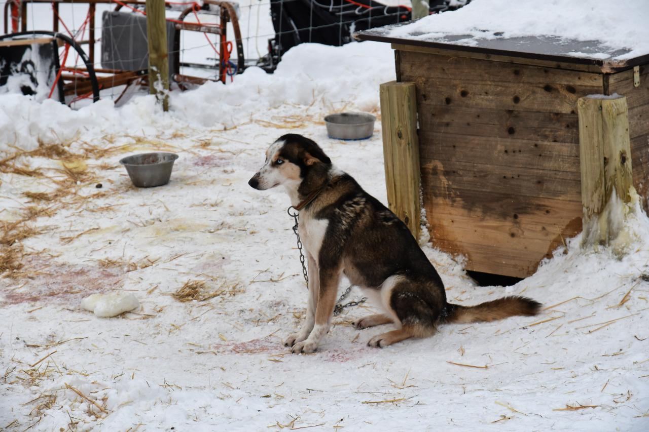 15-Kirkenes-Schlittenhunde-0794