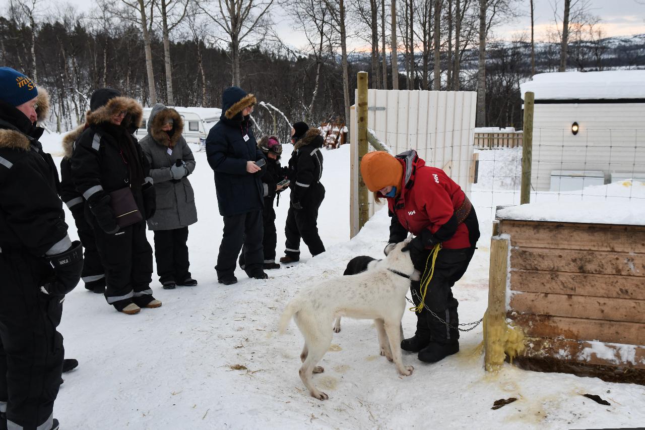 15-Kirkenes-Schlittenhunde-0795