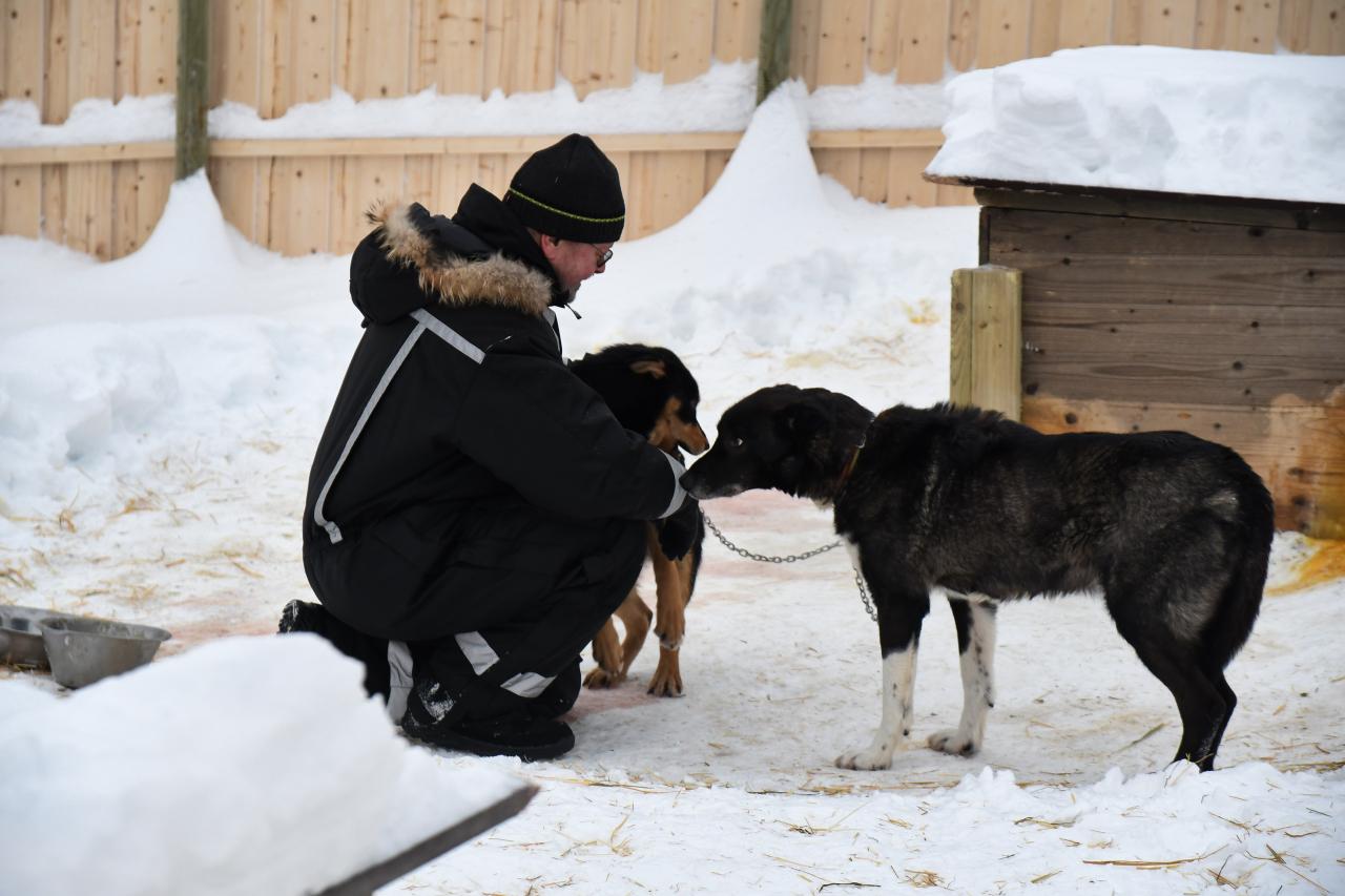 15-Kirkenes-Schlittenhunde-0818