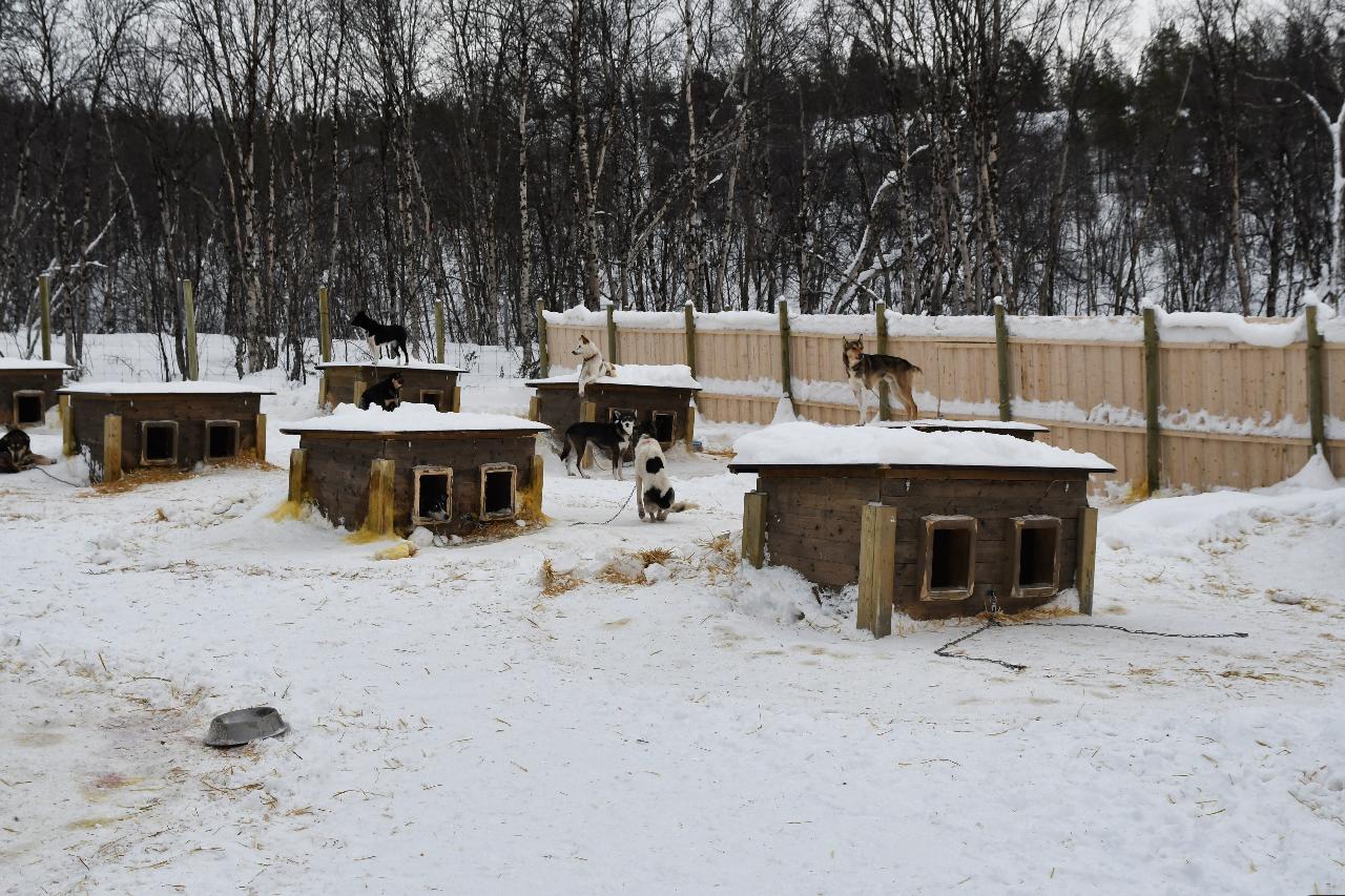 15-Kirkenes-Schlittenhunde-0824