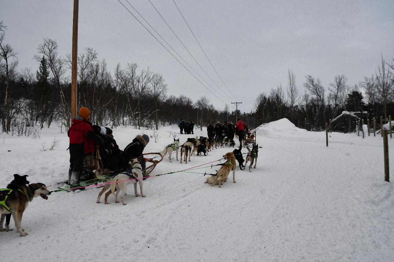 15-Kirkenes-Schlittenhunde-0827