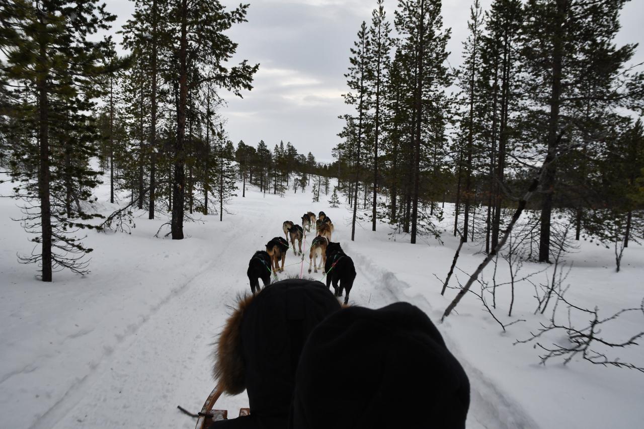 15-Kirkenes-Schlittenhunde-0831