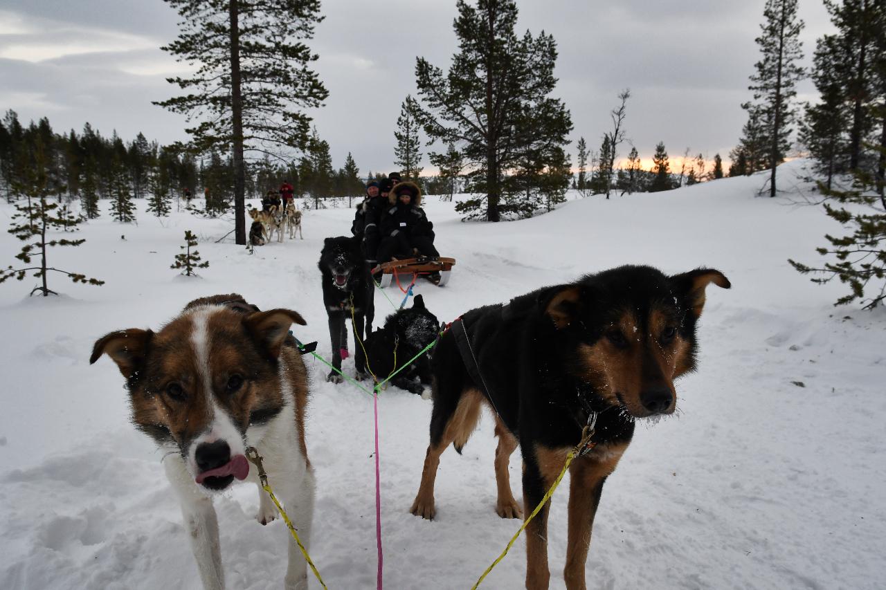 15-Kirkenes-Schlittenhunde-0843