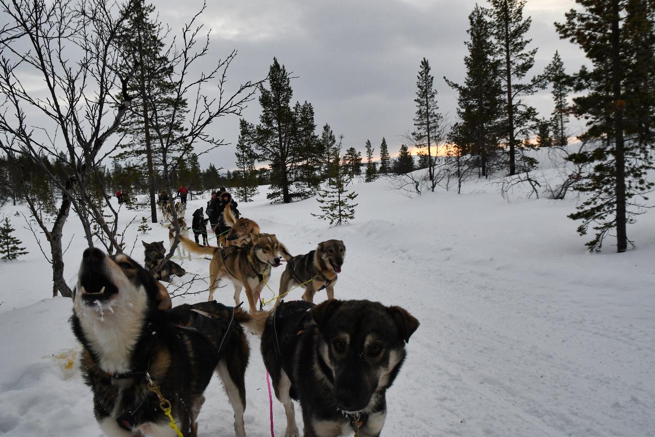 15-Kirkenes-Schlittenhunde-0855