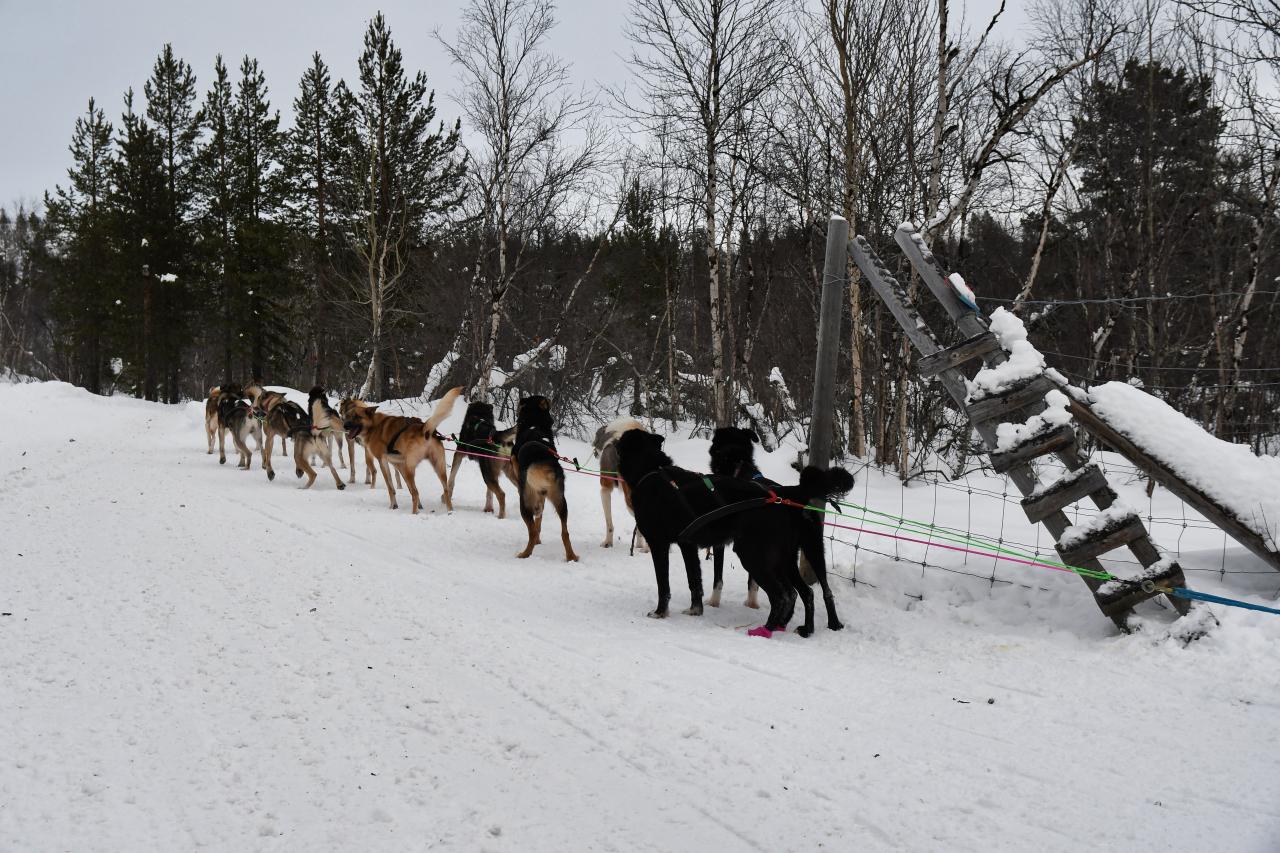 15-Kirkenes-Schlittenhunde-0861