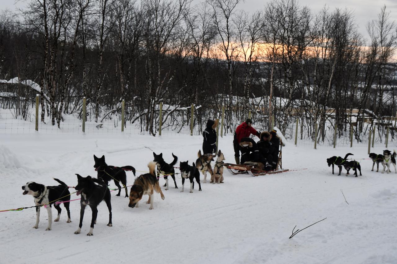 15-Kirkenes-Schlittenhunde-0864
