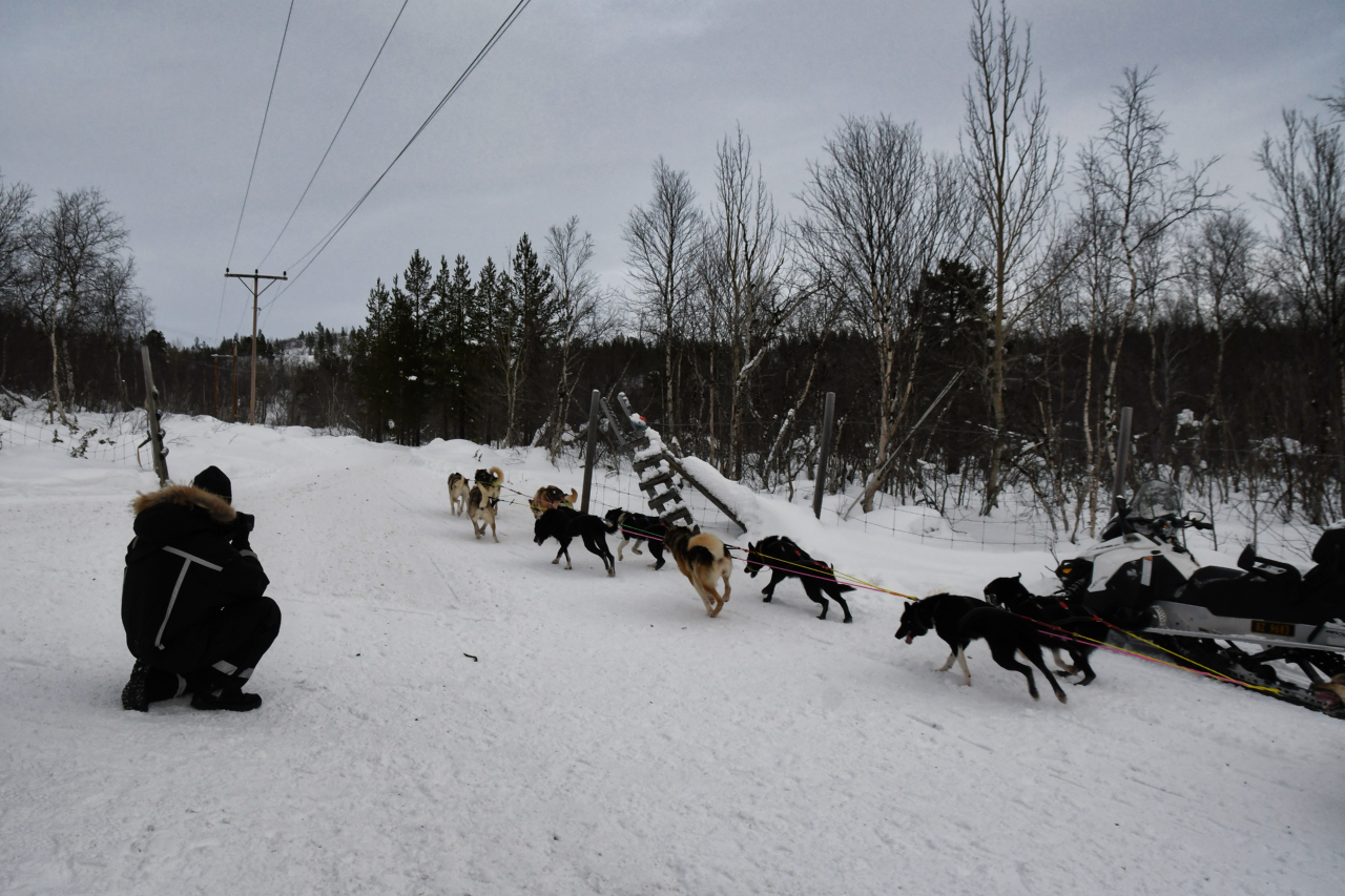 15-Kirkenes-Schlittenhunde-0887
