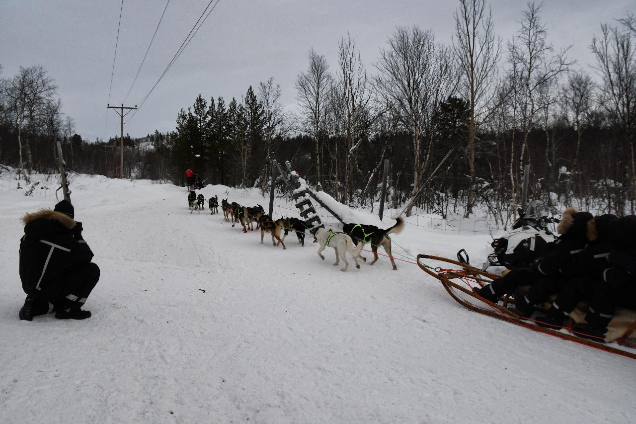 15-Kirkenes-Schlittenhunde-0890