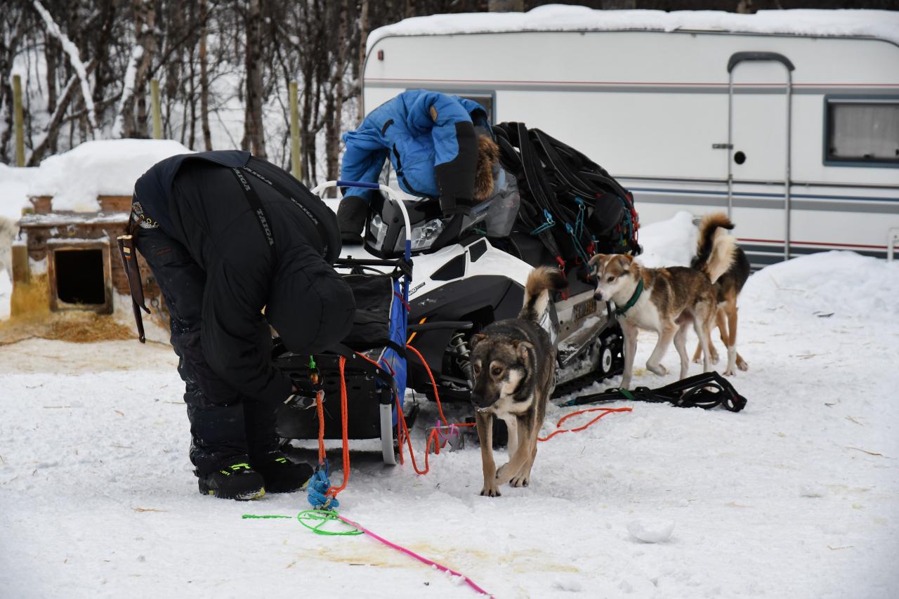 15-Kirkenes-Schlittenhunde-0929