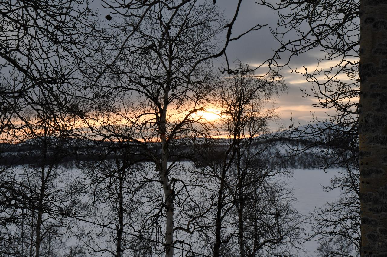 15-Kirkenes-Schlittenhunde-0978
