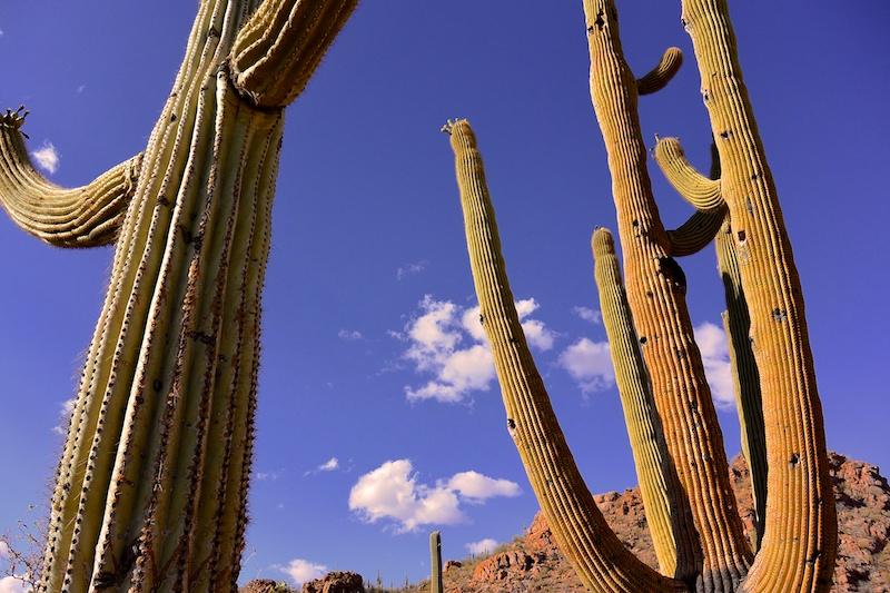 USA 2014 23 Saguaro NP 949