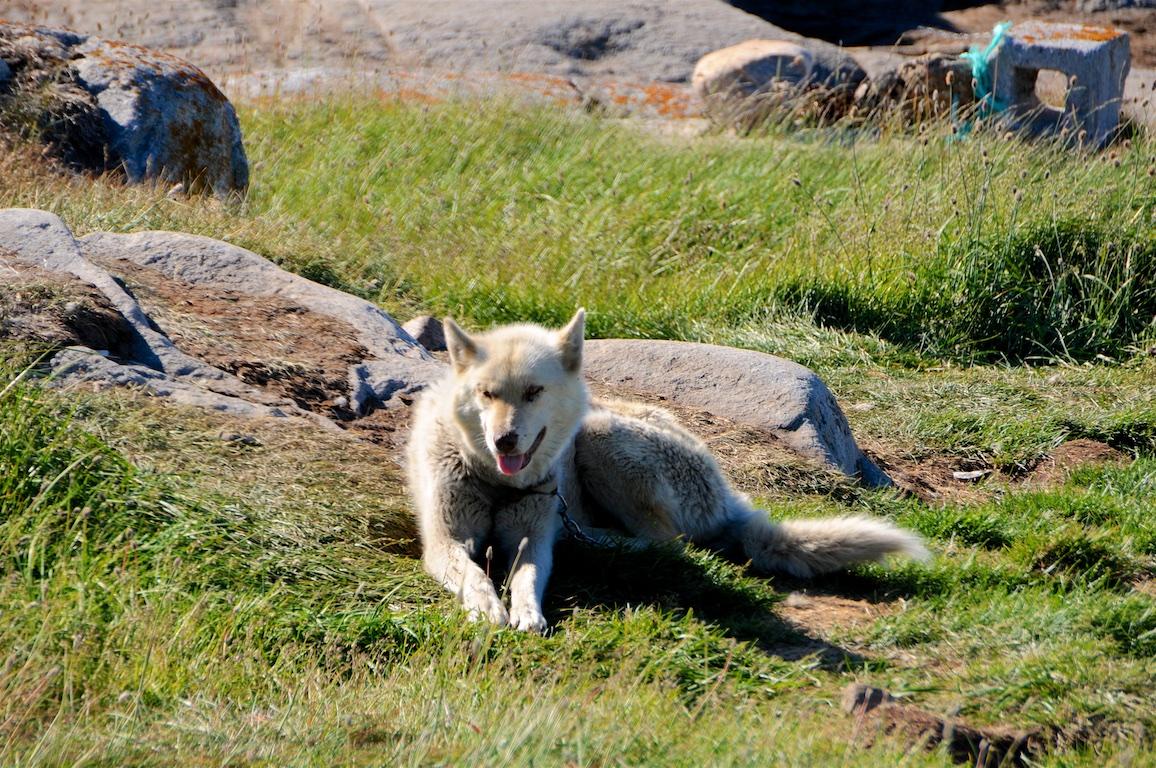 Grönland 2016 Web Auswahl 169